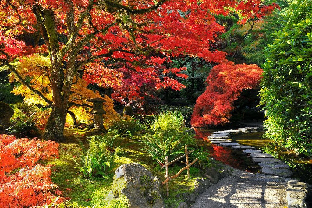 Come fall, Butcharts' Japanese Garden is one of the most colorful places in Victoria to visit. Credit: The Butchart Gardens